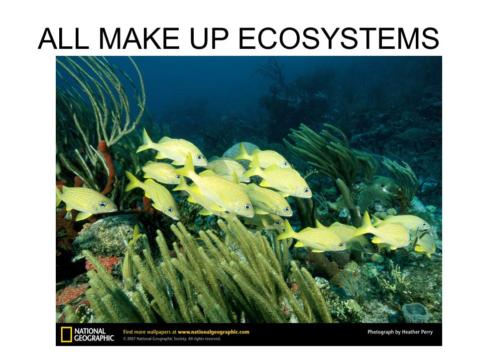 ALL MAKE UP ECOSYSTEMS