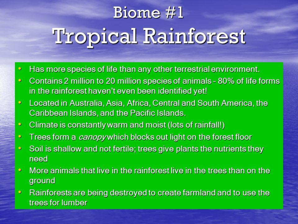 Biome #1 Tropical Rainforest