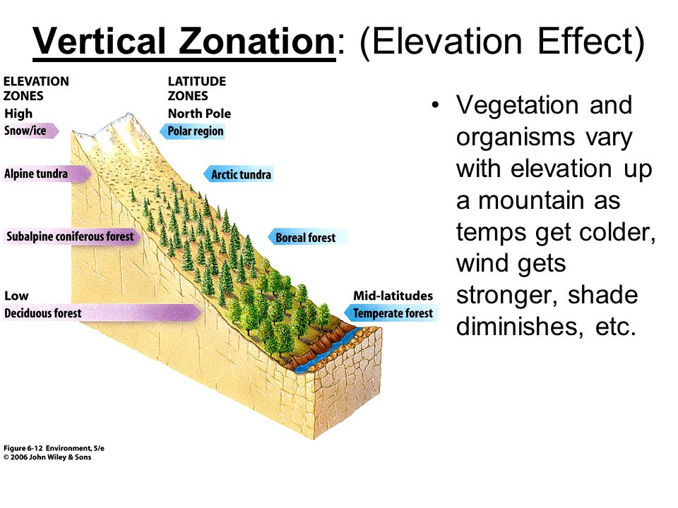 Vertical Zonation: (Elevation Effect)