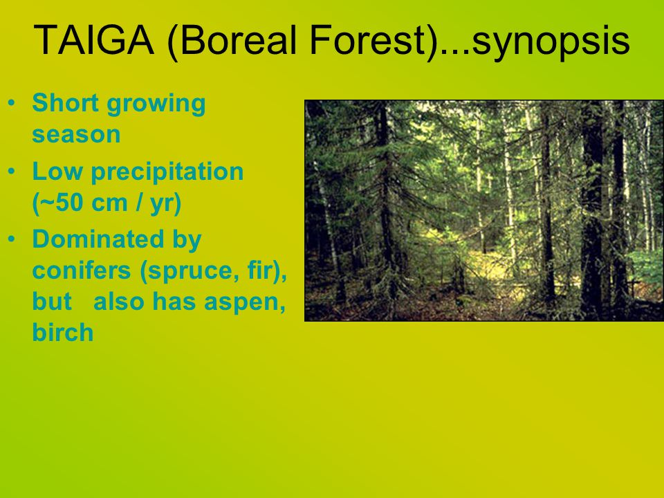 TAIGA (Boreal Forest)...synopsis