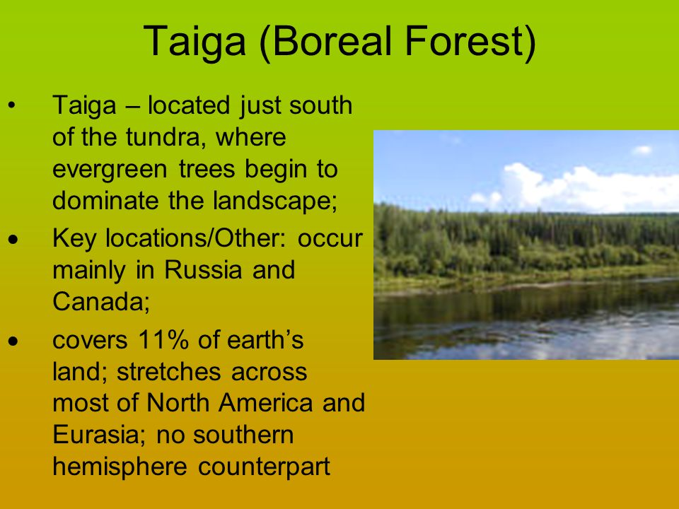 Taiga (Boreal Forest) Taiga – located just south of the tundra, where evergreen trees begin to dominate the landscape;