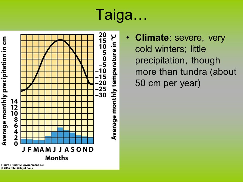 Taiga… Climate: severe, very cold winters; little precipitation, though more than tundra (about 50 cm per year)