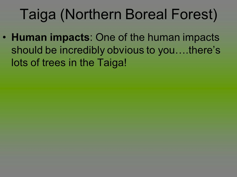 Taiga (Northern Boreal Forest)