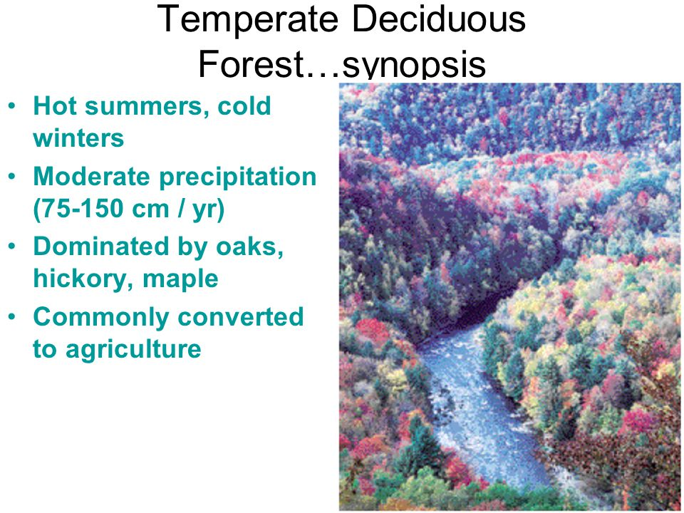Temperate Deciduous Forest…synopsis