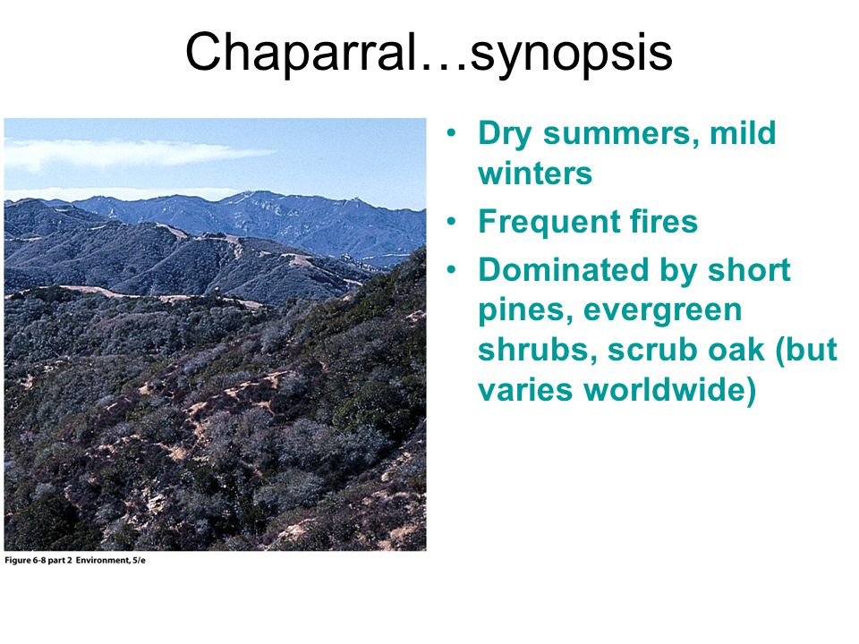 Chaparral…synopsis Dry summers, mild winters Frequent fires