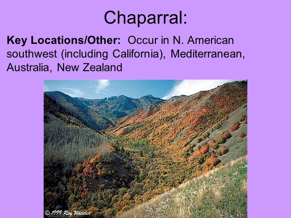 Chaparral: Key Locations/Other: Occur in N.