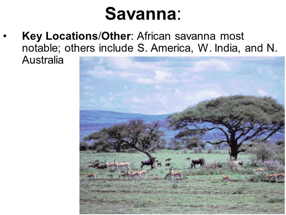 Savanna: Key Locations/Other: African savanna most notable; others include S.