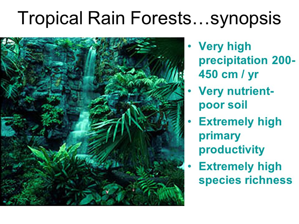 Tropical Rain Forests…synopsis