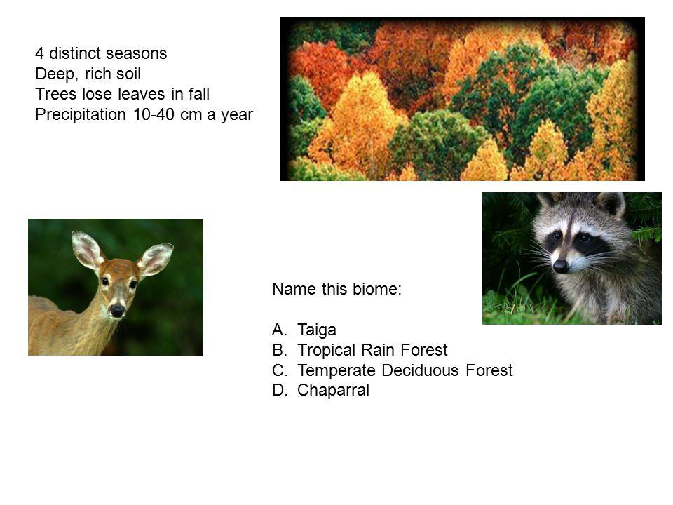 4 distinct seasons Deep, rich soil. Trees lose leaves in fall. Precipitation 10-40 cm a year. Name this biome: