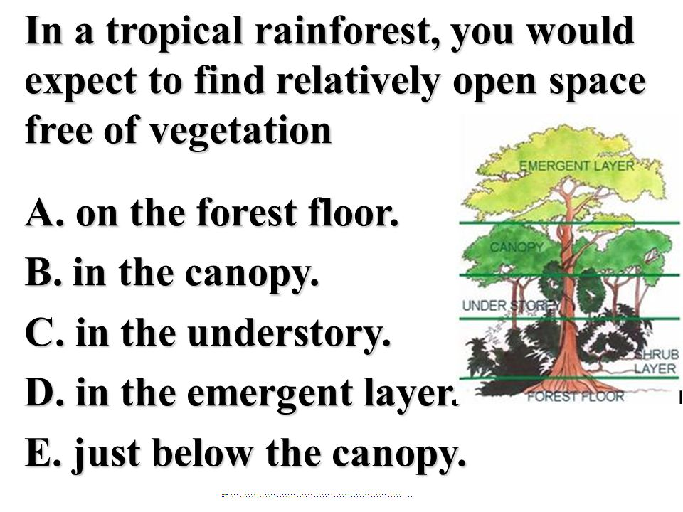 In a tropical rainforest, you would expect to find relatively open space free of vegetation A. on the forest floor. B. in the canopy. C. in the understory. D. in the emergent layer. E. just below the canopy.