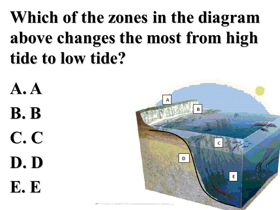 Which of the zones in the diagram above changes the most from high tide to low tide A. A B. B C. C D. D E. E