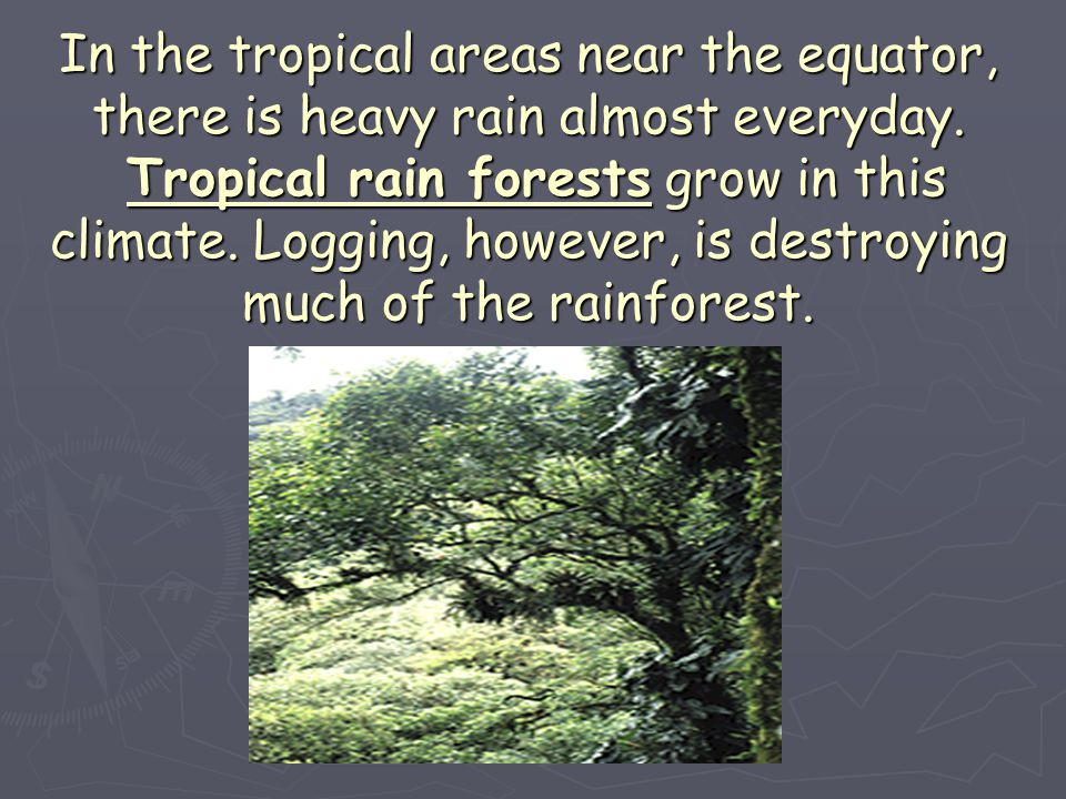 In the tropical areas near the equator, there is heavy rain almost everyday.