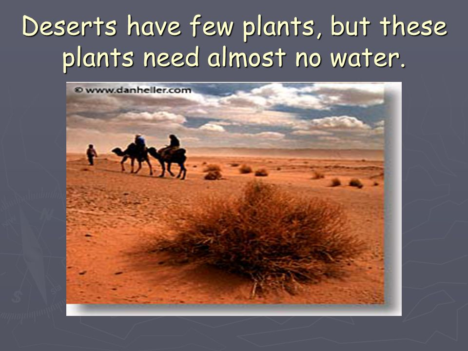 Deserts have few plants, but these plants need almost no water.