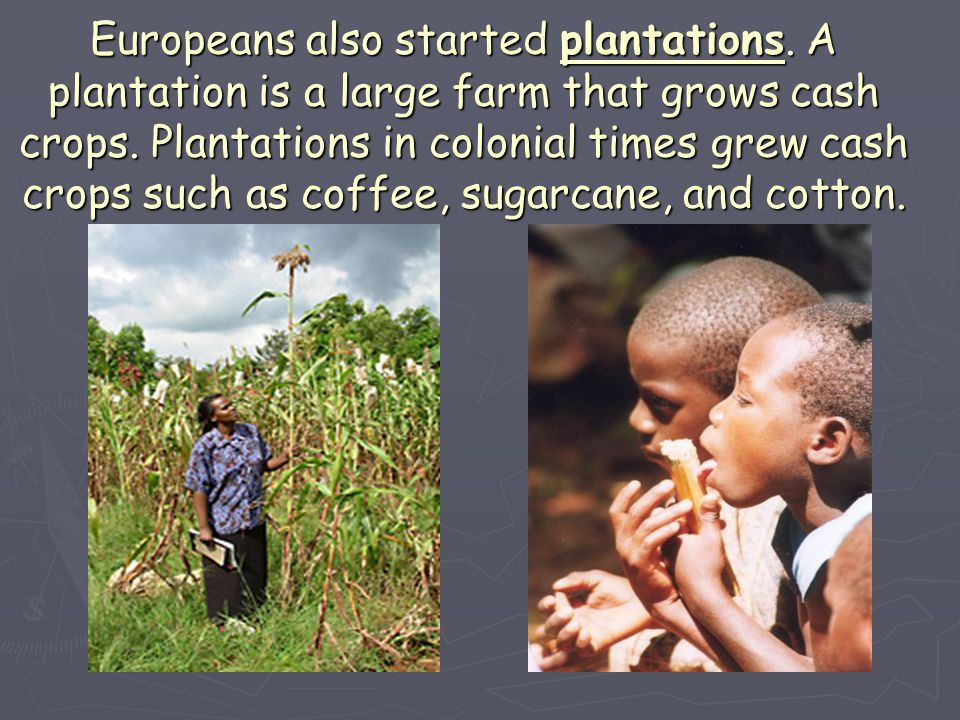 Europeans also started plantations