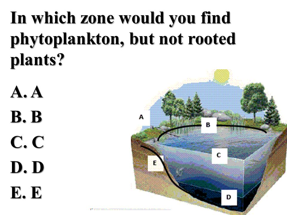 In which zone would you find phytoplankton, but not rooted plants. A