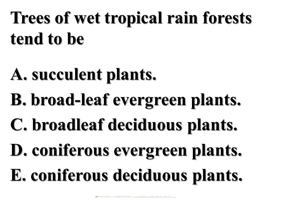Trees of wet tropical rain forests tend to be A. succulent plants. B