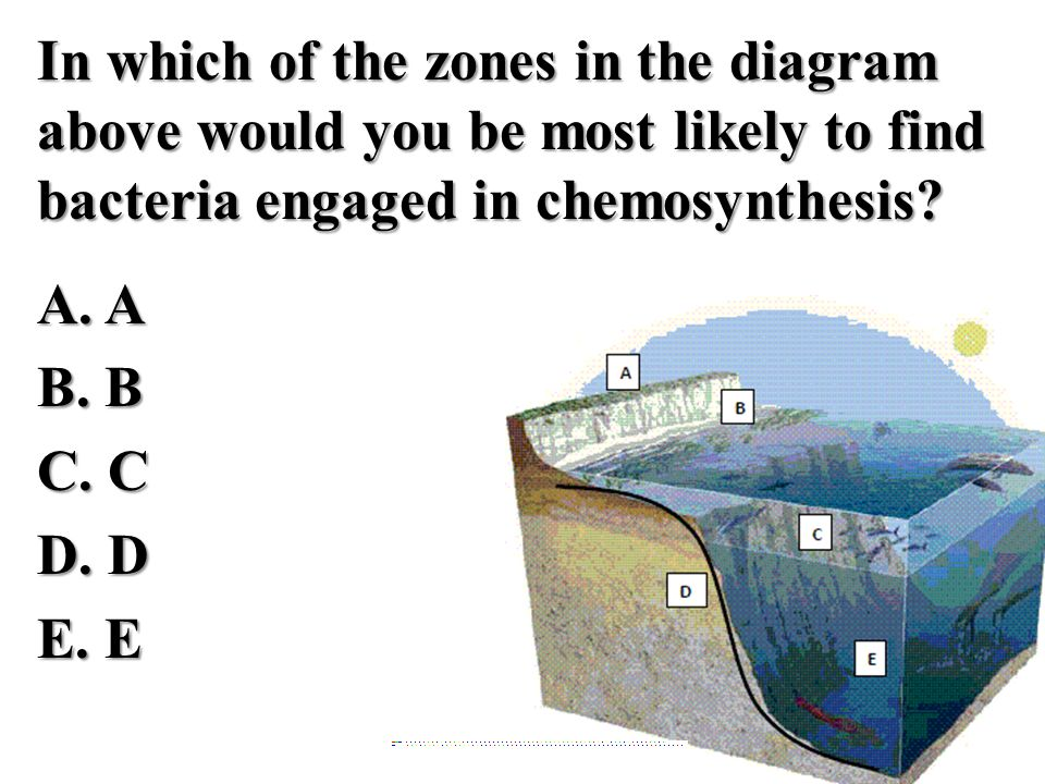 In which of the zones in the diagram above would you be most likely to find bacteria engaged in chemosynthesis A. A B. B C. C D. D E. E
