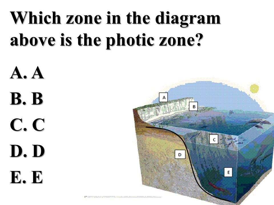 Which zone in the diagram above is the photic zone. A. A B. B C. C D