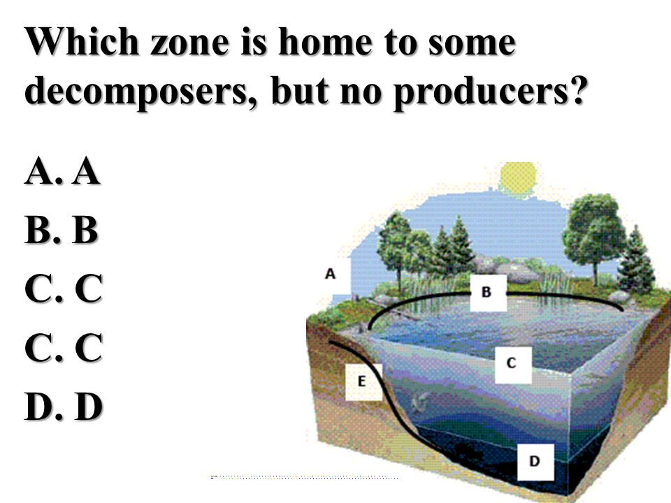 Which zone is home to some decomposers, but no producers. A. A B. B C