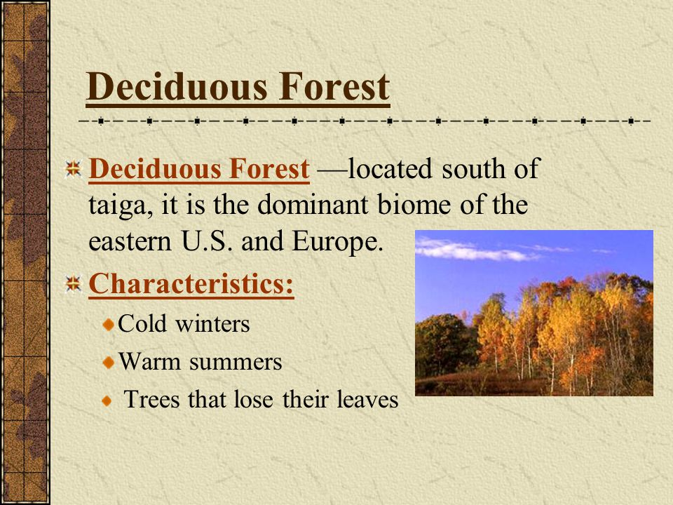 Deciduous Forest Deciduous Forest —located south of taiga, it is the dominant biome of the eastern U.S. and Europe.