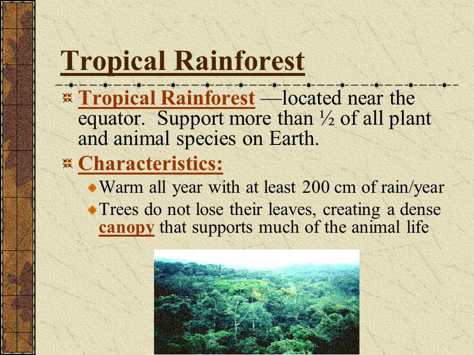 Tropical Rainforest Tropical Rainforest —located near the equator. Support more than ½ of all plant and animal species on Earth.