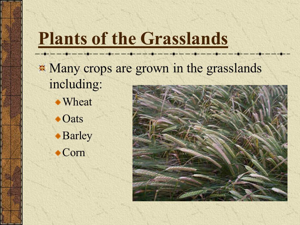 Plants of the Grasslands