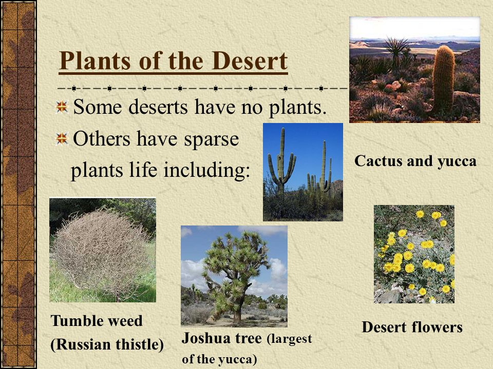 Plants of the Desert Some deserts have no plants. Others have sparse