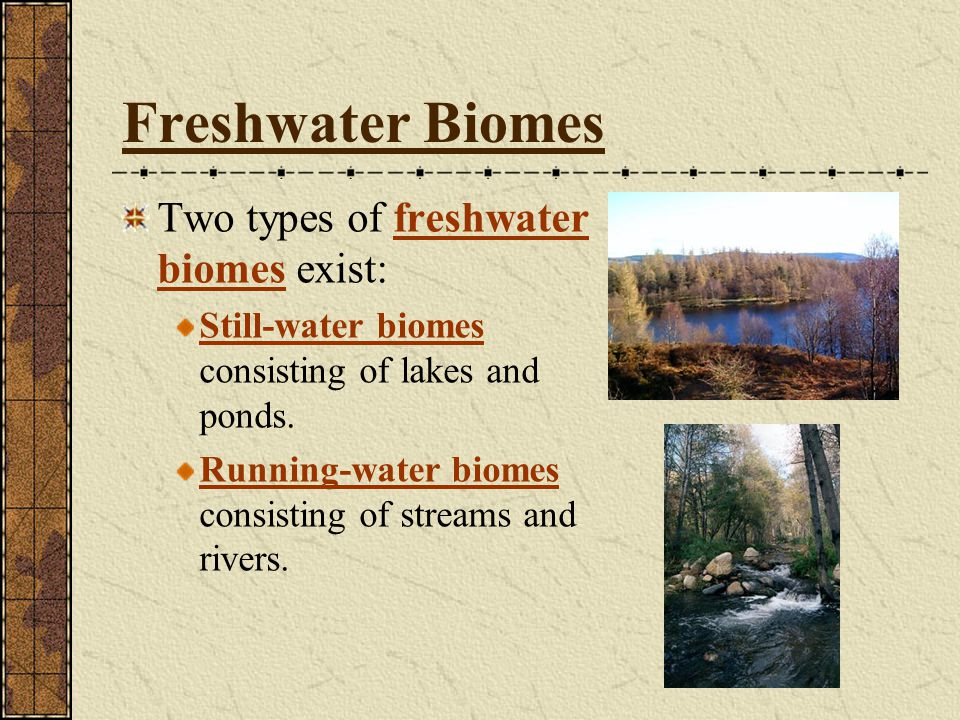 Freshwater Biomes Two types of freshwater biomes exist: