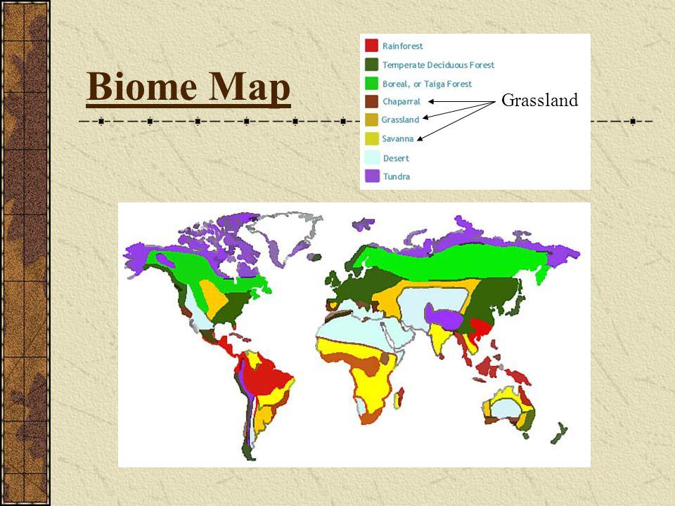 Biome Map Grassland