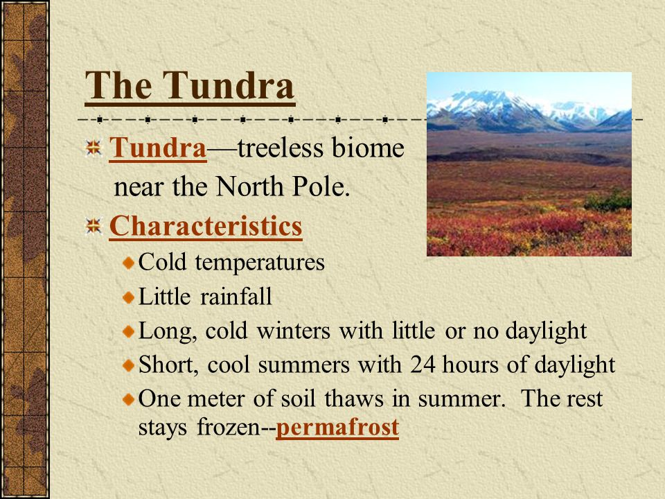The Tundra Tundra—treeless biome near the North Pole. Characteristics