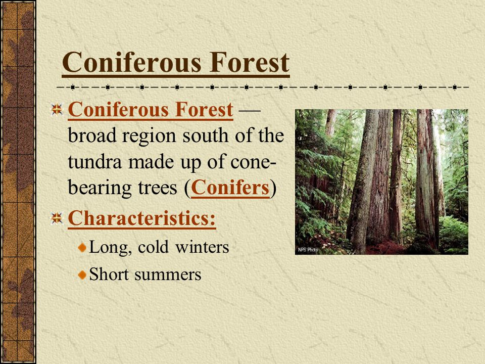 Coniferous Forest Coniferous Forest —broad region south of the tundra made up of cone-bearing trees (Conifers)