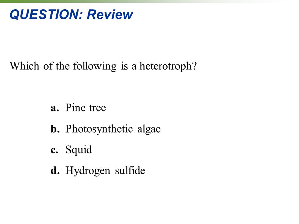 QUESTION: Review Which of the following is a heterotroph a. Pine tree