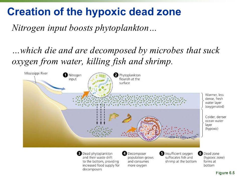 Creation of the hypoxic dead zone