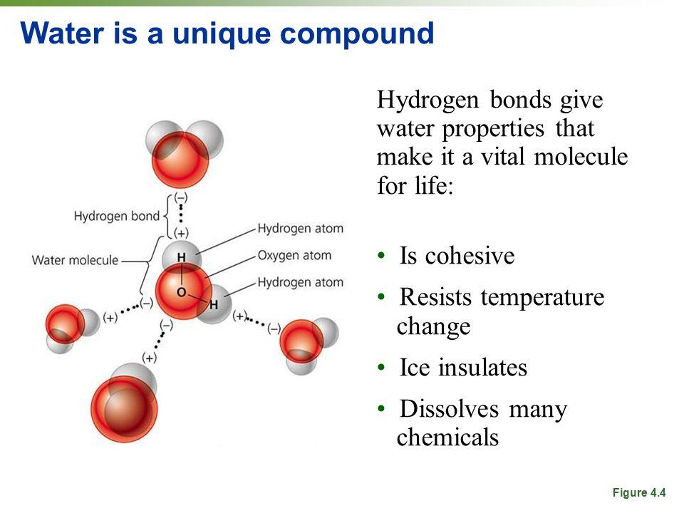 Water is a unique compound