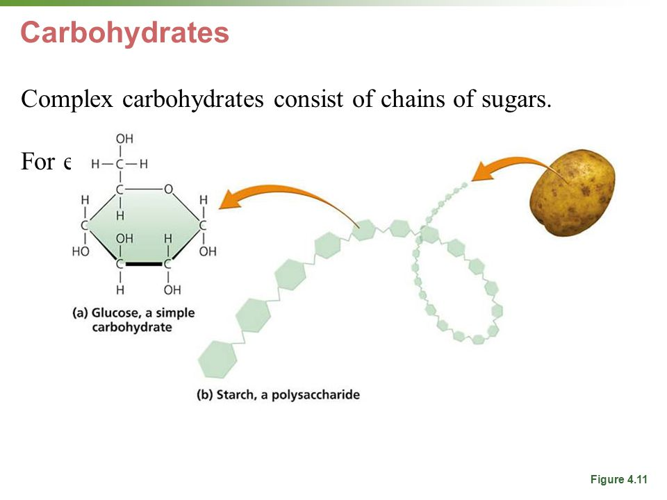 Carbohydrates Complex carbohydrates consist of chains of sugars. For energy, also structural (cellulose, chitin)