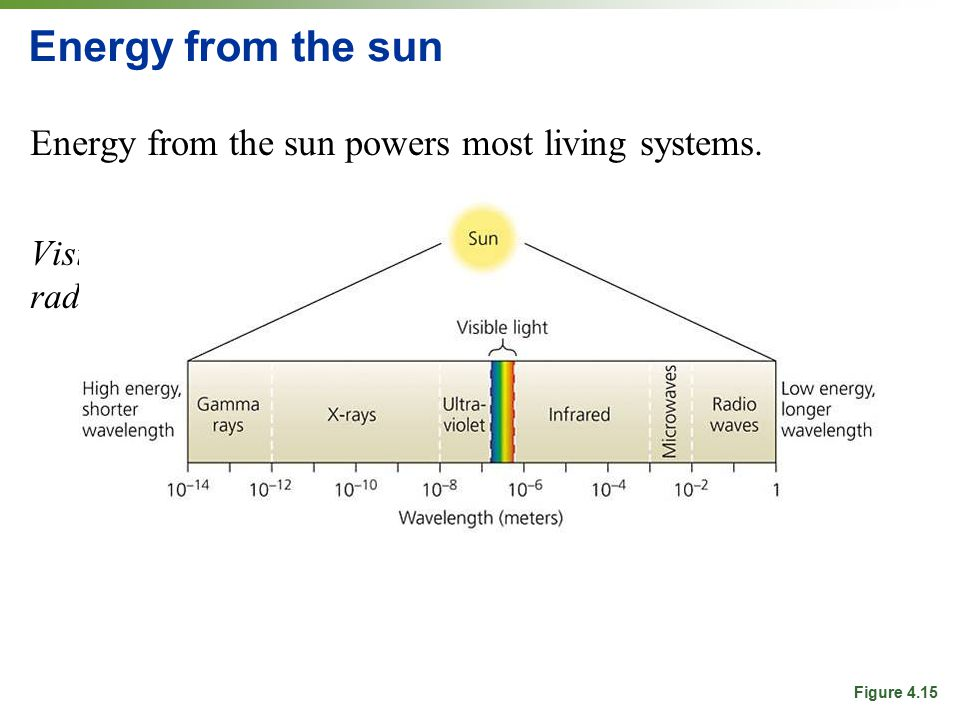 Energy from the sun Energy from the sun powers most living systems.