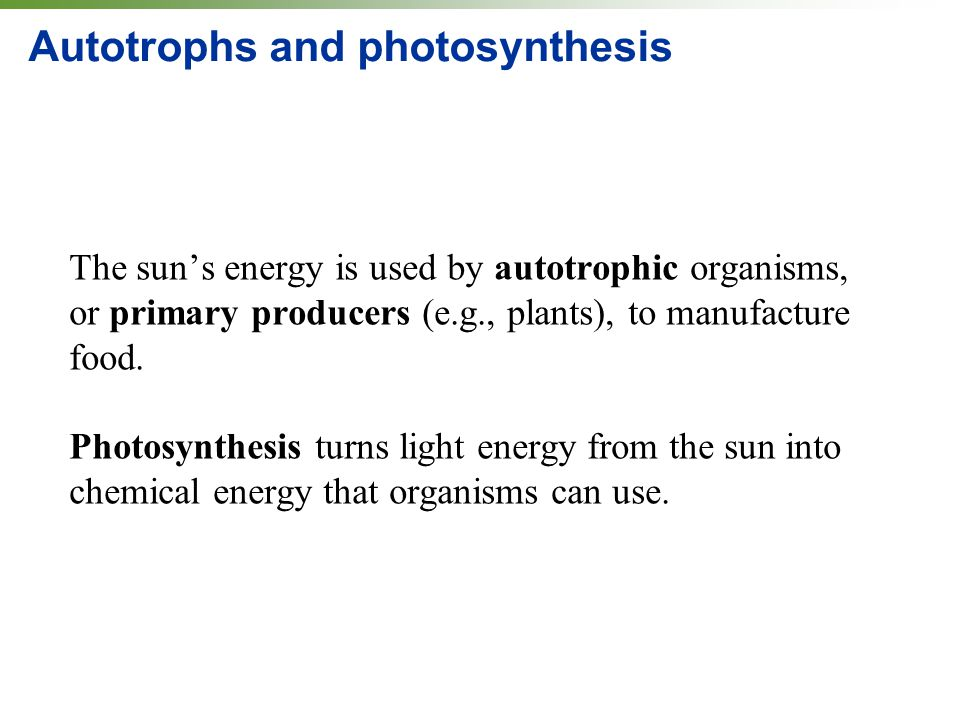Autotrophs and photosynthesis