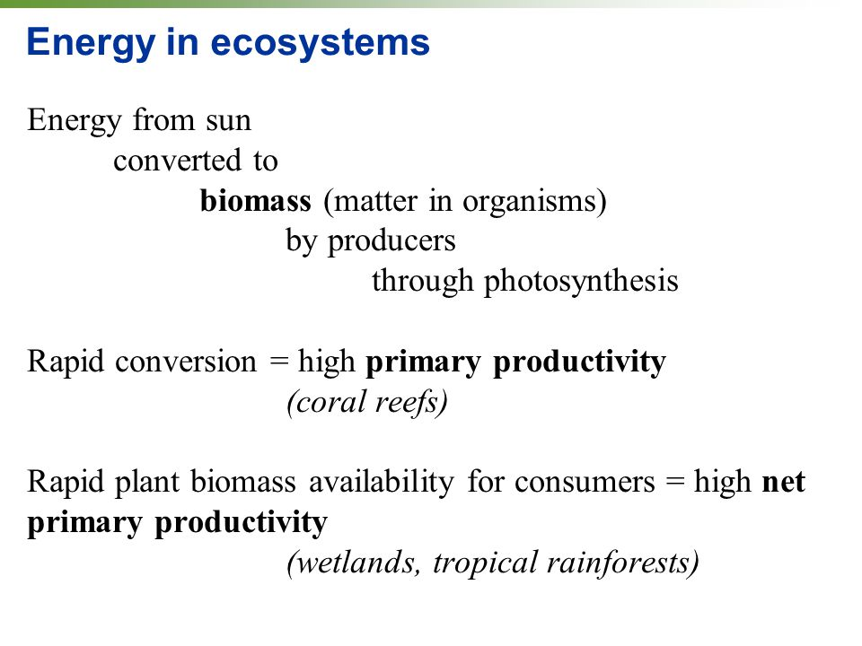 Energy in ecosystems Energy from sun converted to