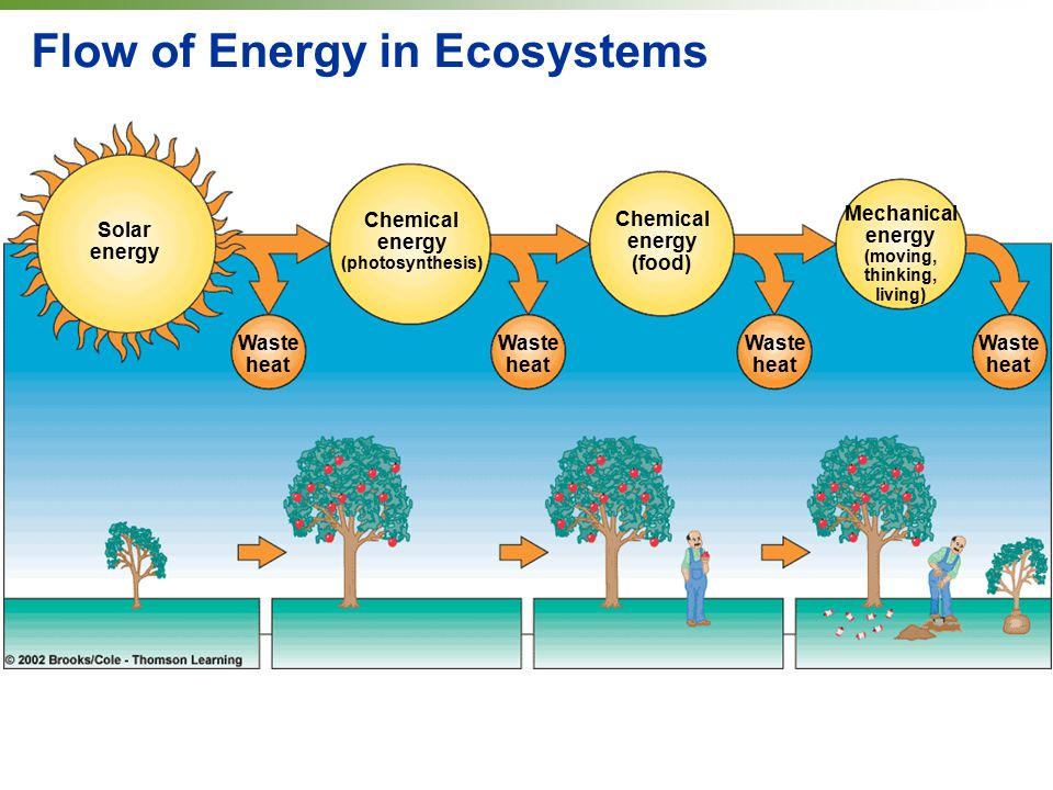 Flow of Energy in Ecosystems