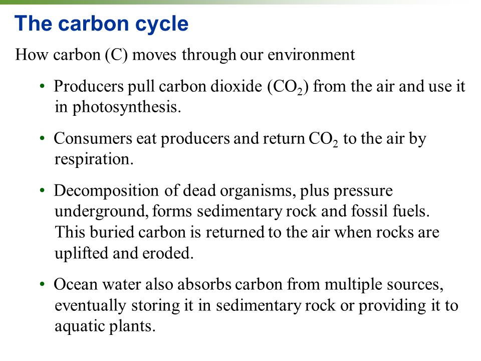 The carbon cycle How carbon (C) moves through our environment