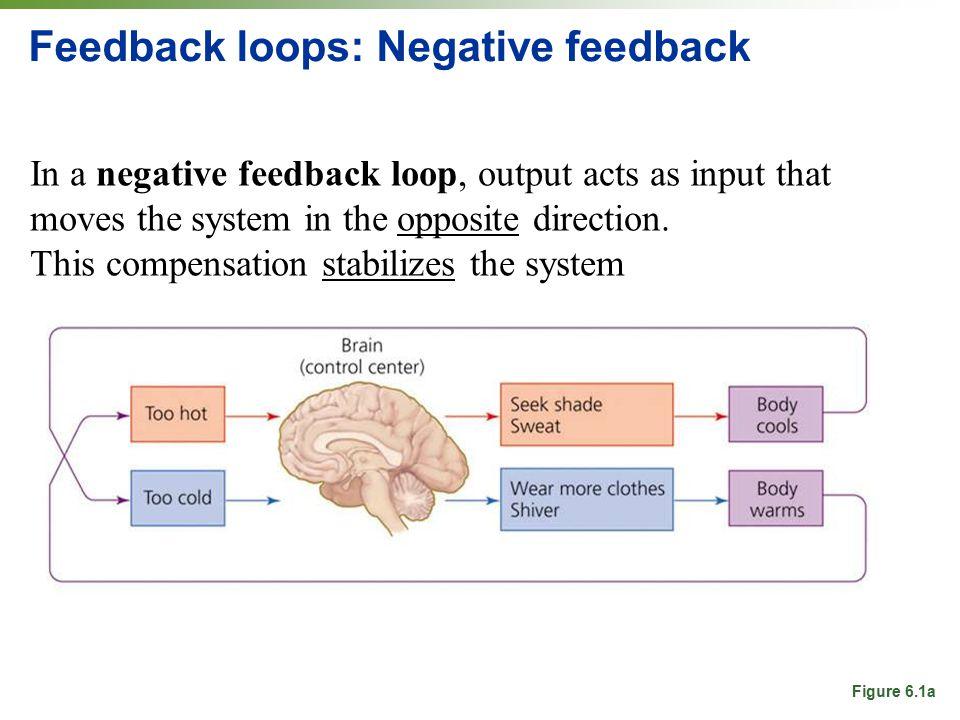 Feedback loops: Negative feedback