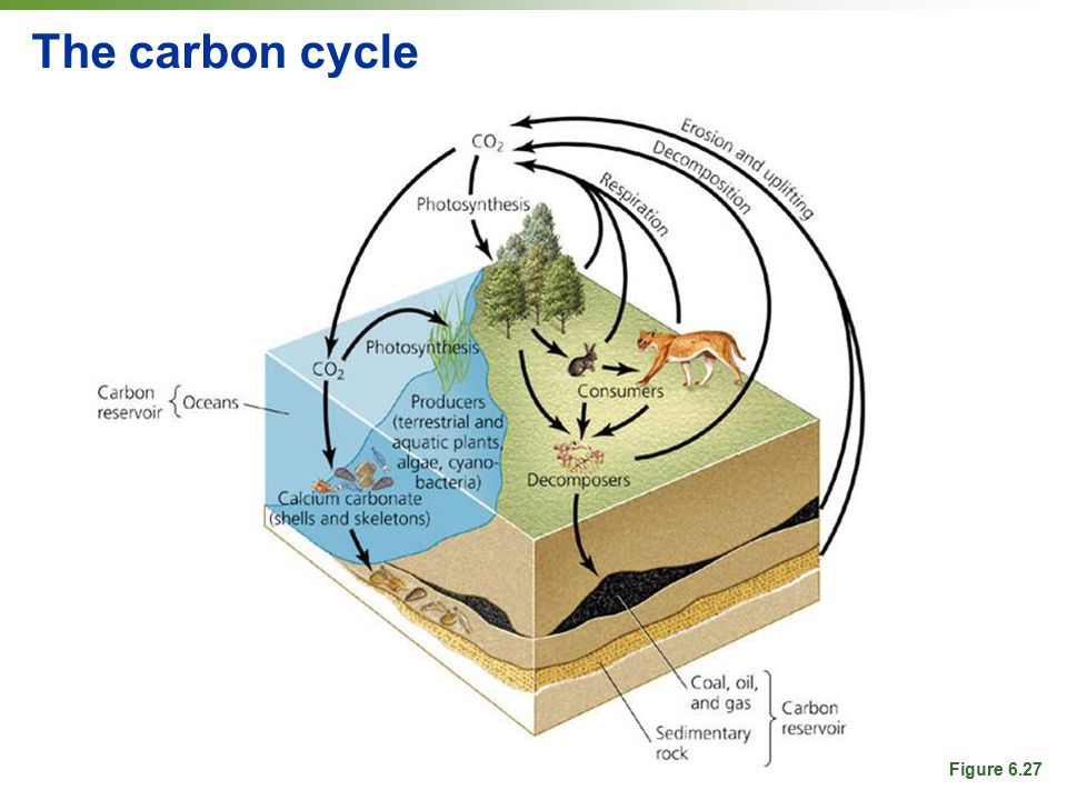 The carbon cycle Figure 6.27