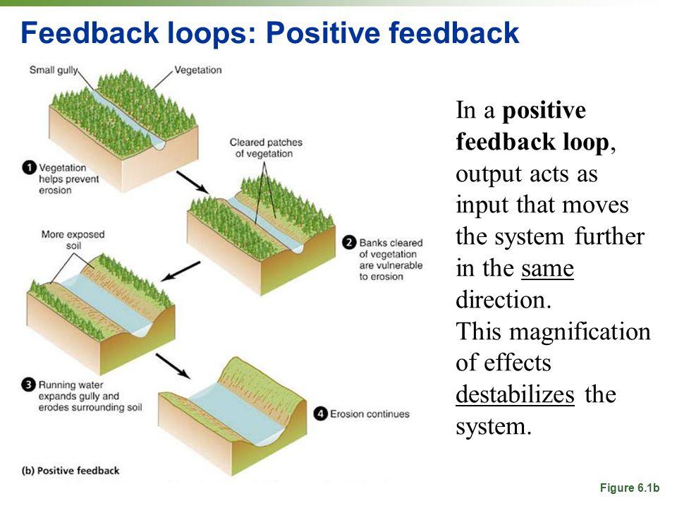Feedback loops: Positive feedback