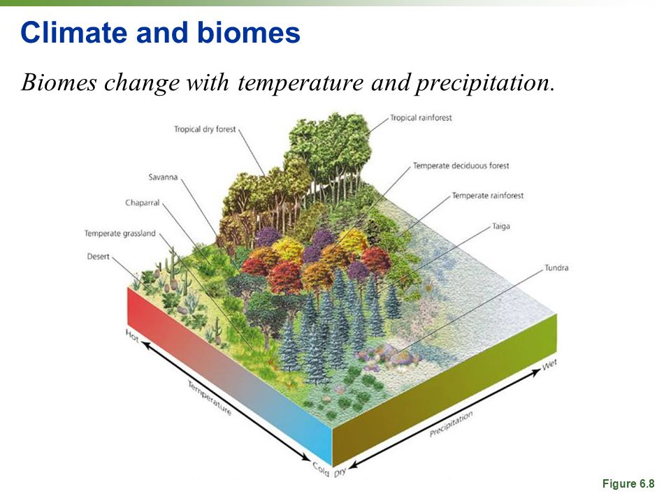 Climate and biomes Biomes change with temperature and precipitation.