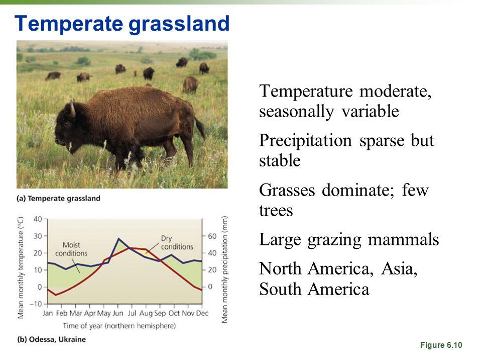 Temperate grassland Temperature moderate, seasonally variable