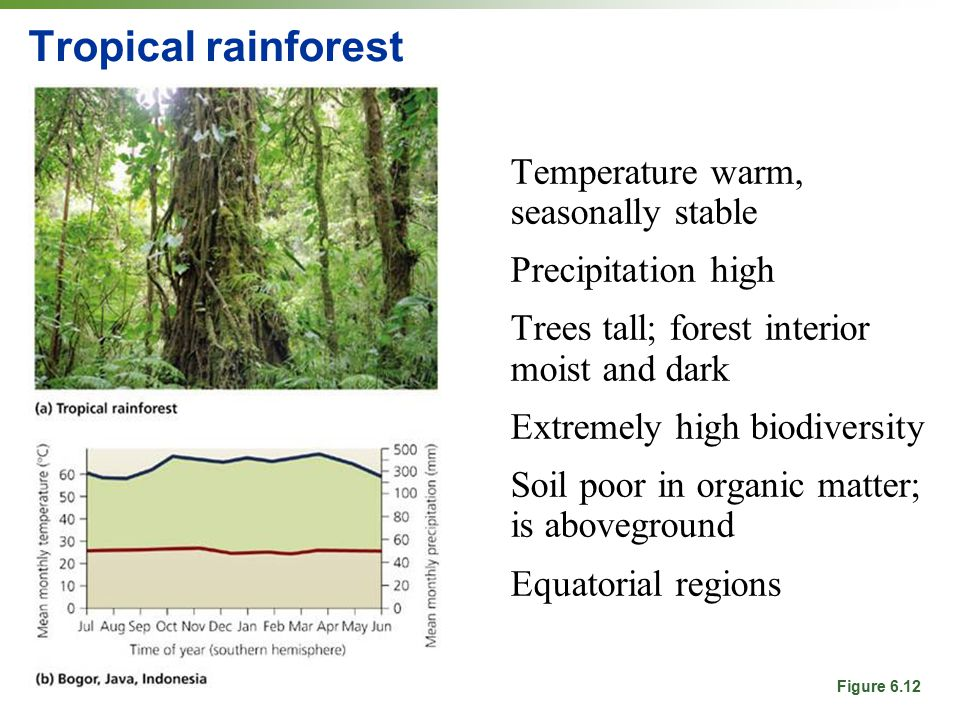 Tropical rainforest Temperature warm, seasonally stable