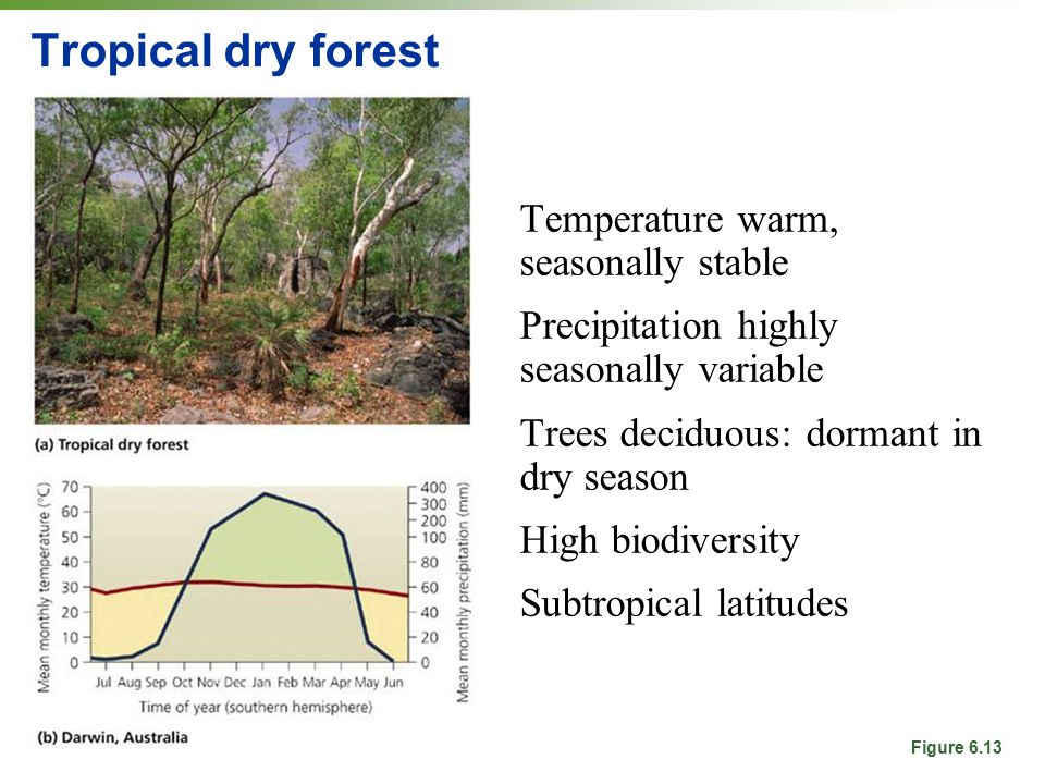 Tropical dry forest Temperature warm, seasonally stable