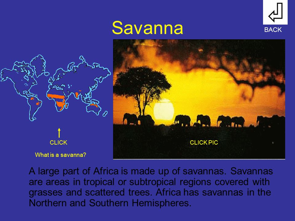 Savanna BACK. CLICK. CLICK PIC. What is a savanna