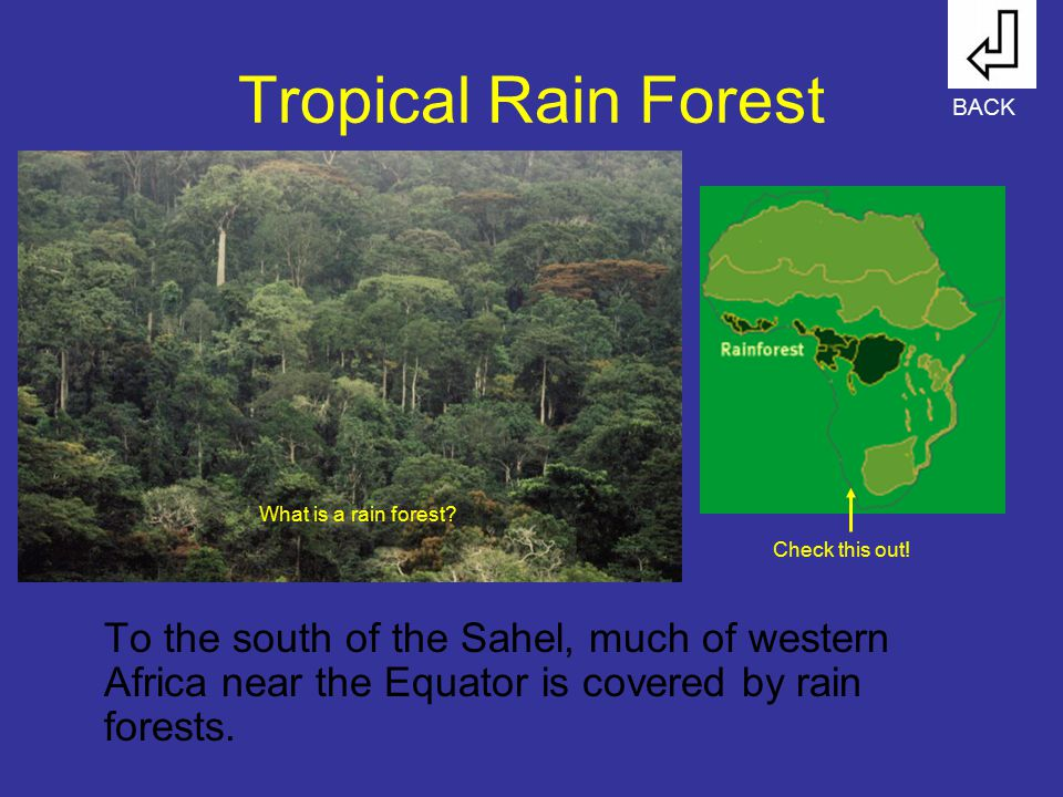 Tropical Rain Forest BACK. What is a rain forest Check this out!