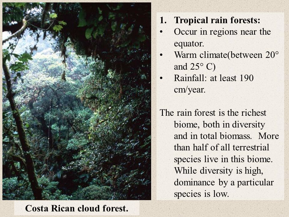 Costa Rican cloud forest.